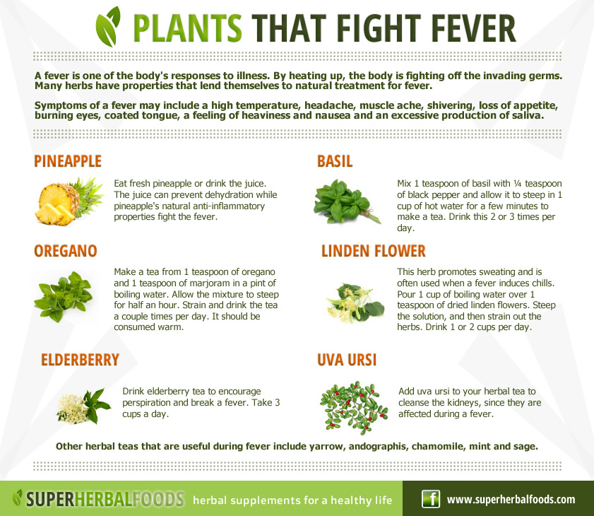 super herbal foods natural remedies   herbs that fight fever