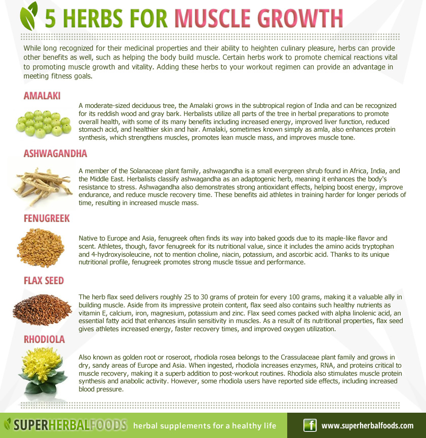 5 Herbs for Muscle Growth
